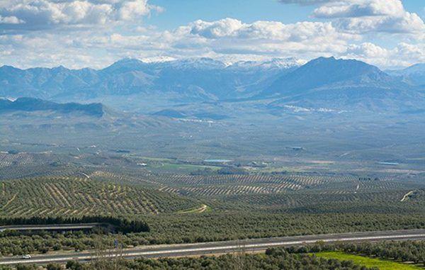 Un paisaje agrario con las sierras de Segura y de Cazorla al fondo, en jaén. Foto: UPA.