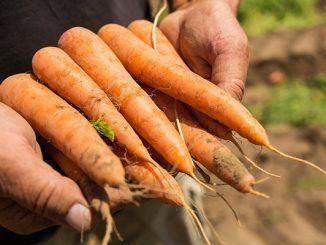 BASF se convertirá en un socio aún mejor para los agricultores