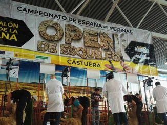XI Open de Esquileo de Extremadura, celebrado este sábado en Castuera