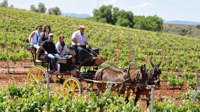 Primavera Enogastronómica de la Ruta del Vino Ribera del Guadiana