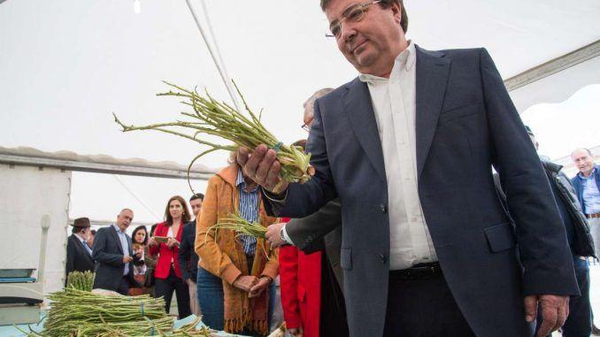 Inauguración de la VII Feria del Espárrago y la Tagarnina en Alconchel