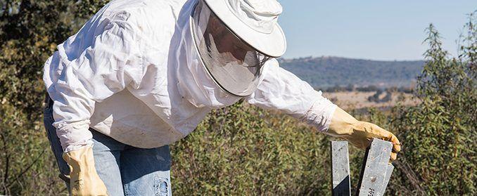 el sector apícola regional es el que tiene el mayor número de colmenas en España con más de 630.000