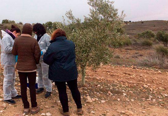 Técnicos realizando pruebas al olivo afectado por Xylella fastidiosa, ayer en Villarejo de Salvanés (Madrid)