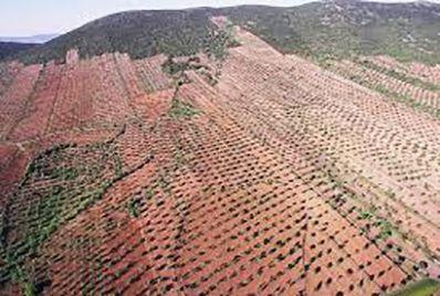 El objeto de la transformación en regadío de esta zona de la comarca de La Serena es establecer riegos de apoyo, preferentemente al cultivo del olivar existente